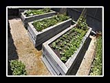 raised beds in a row