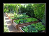 raised beds full of vegatables