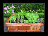 raised bed full of plants