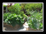 raised beds organic