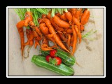 fresh beautiful carrots